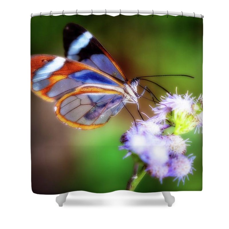 Beautiful Shower Curtain featuring the photograph Clear Wings by Charles Wollertz