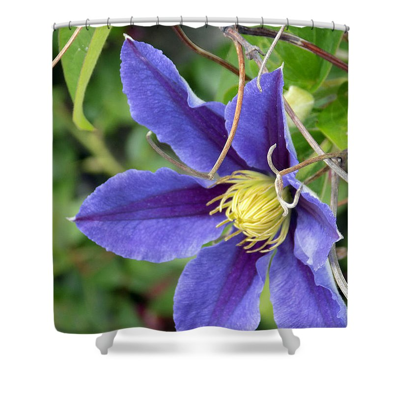 Macro Shower Curtain featuring the photograph Clematis Blossom by William Tasker