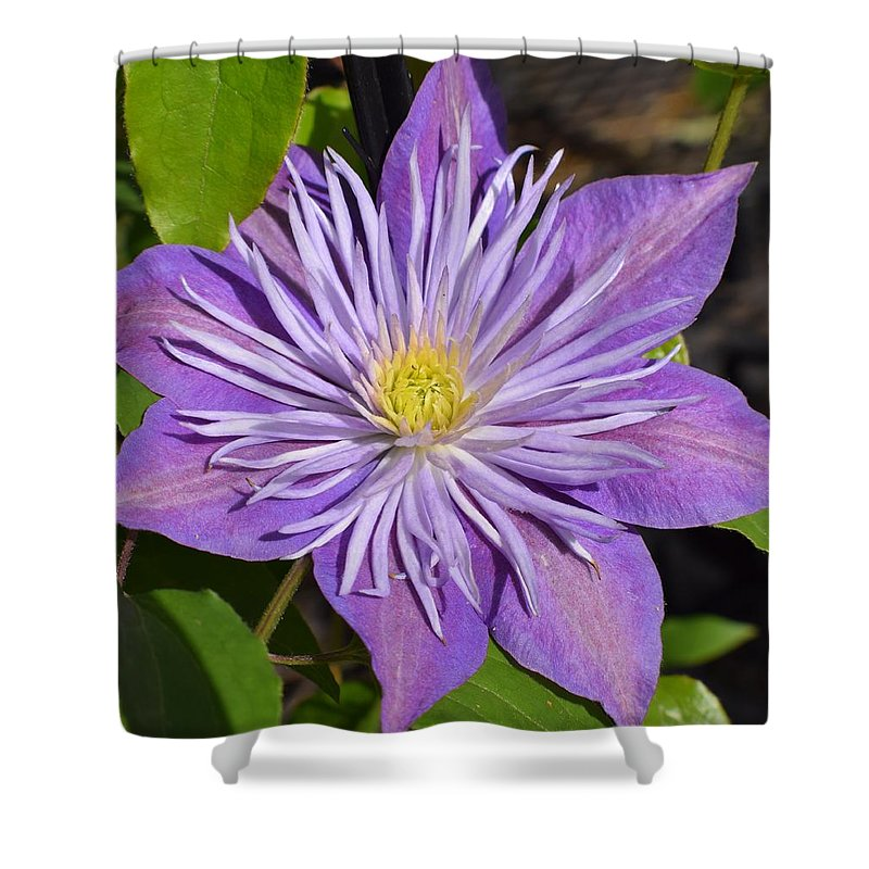 Clematis Shower Curtain featuring the photograph Clematis 'sunnyside' by Jimmy Chuck Smith