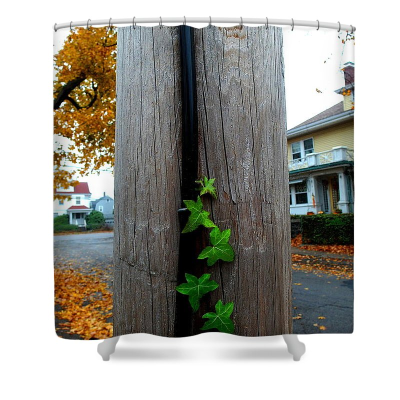 Vine Shower Curtain featuring the photograph Climbing Vine by Christopher Brown