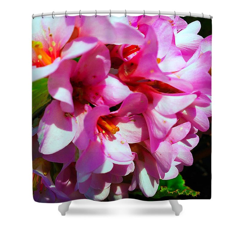 Bergenia Cordifolia Shower Curtain featuring the photograph Close To Me by Jasna Dragun