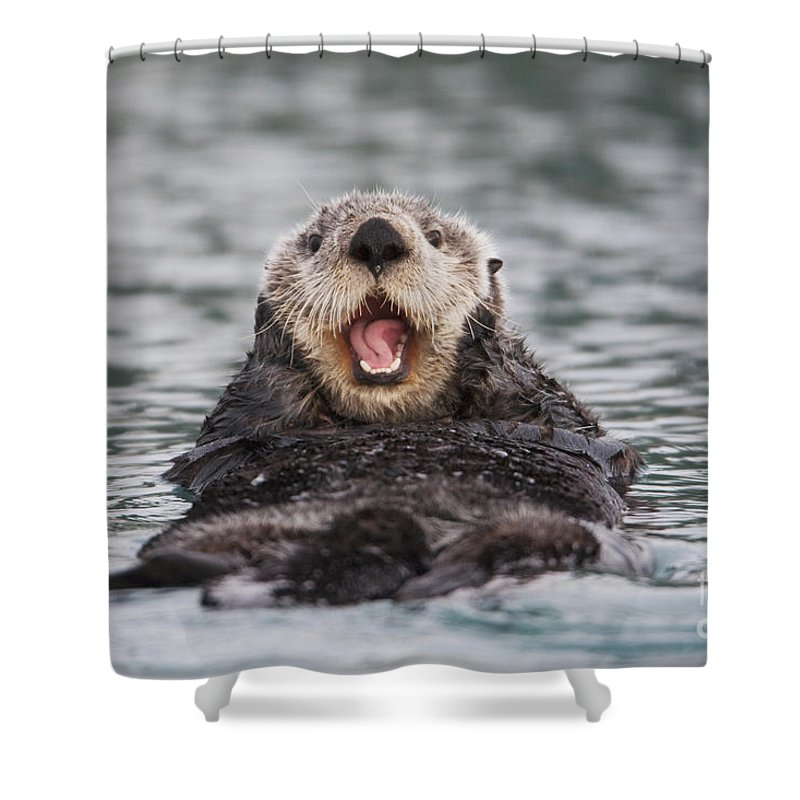 Burcham Shower Curtain Featuring The Photograph Close Up Of A Sea Otter Swimming 2 By Milo