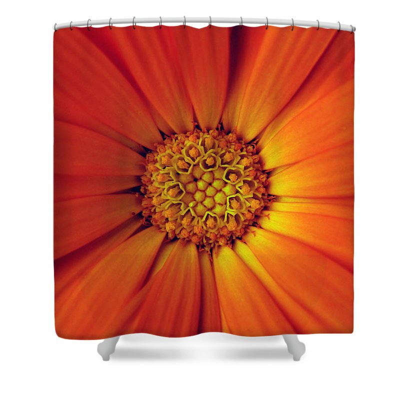 Plant Shower Curtain featuring the photograph Close Up Of An Orange Daisy by Ralph A Ledergerber-Photography