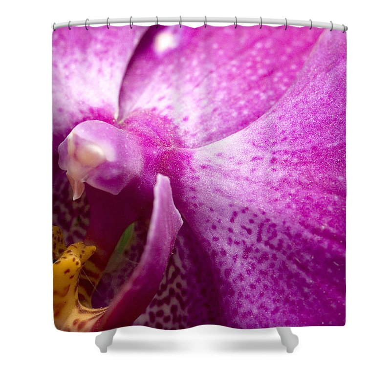 Orchids Shower Curtain featuring the photograph Close View Of A Pink Orchid Blossom by Todd Gipstein