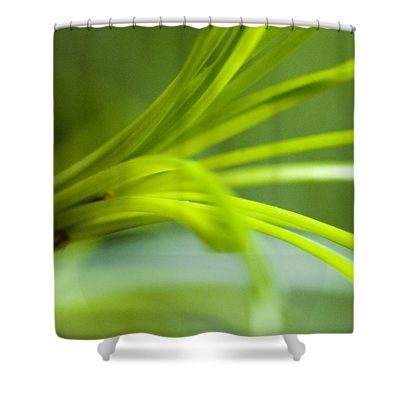 Flowers Shower Curtain featuring the photograph Close View Of Green Flower by Todd Gipstein