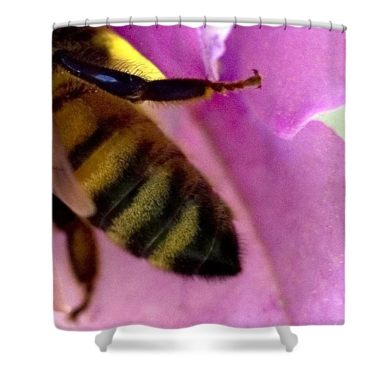Photography Shower Curtain featuring the photograph Close View Of Single Honey Bee by Todd Gipstein