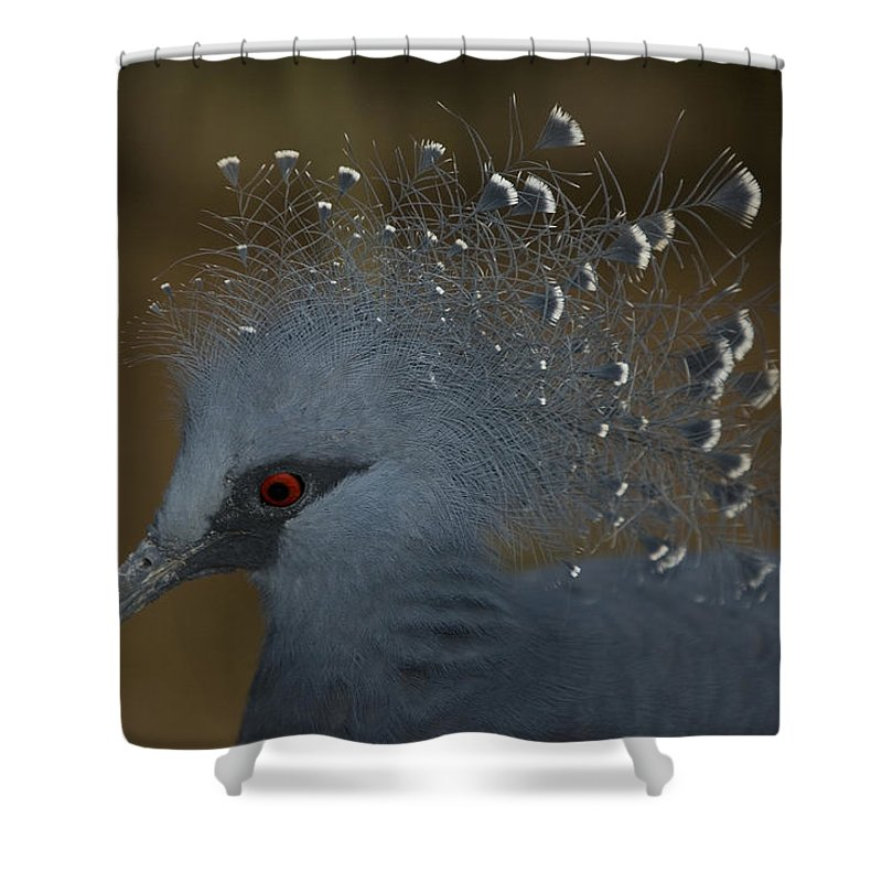 One Animal Shower Curtain featuring the photograph Closeup Of A Captive Victoria Crowned by Tim Laman