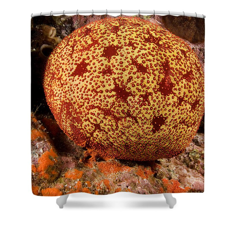 Underwater Shower Curtain featuring the photograph Closeup Of A Colorful Cushion Star by Tim Laman