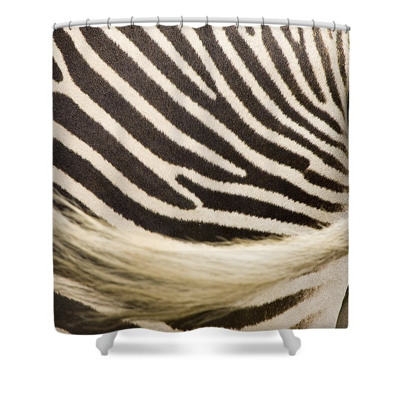 Captive Animals Shower Curtain featuring the photograph Closeup Of A Grevys Zebras Rear End by Tim Laman