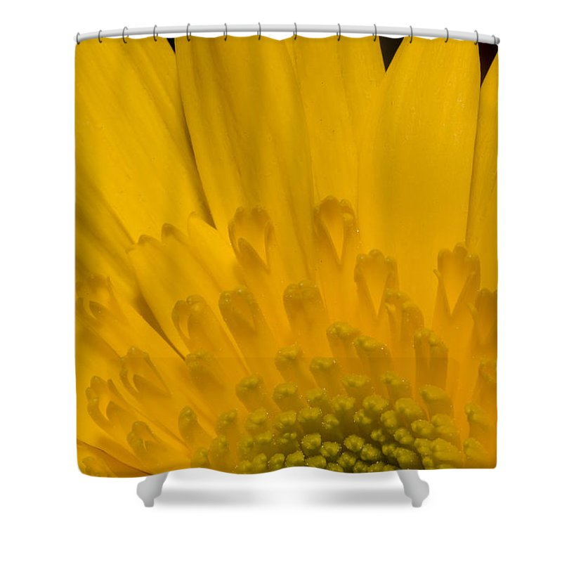 Closeups Shower Curtain featuring the photograph Closeup Of A Yellow Chrysanthemum by Tim Laman