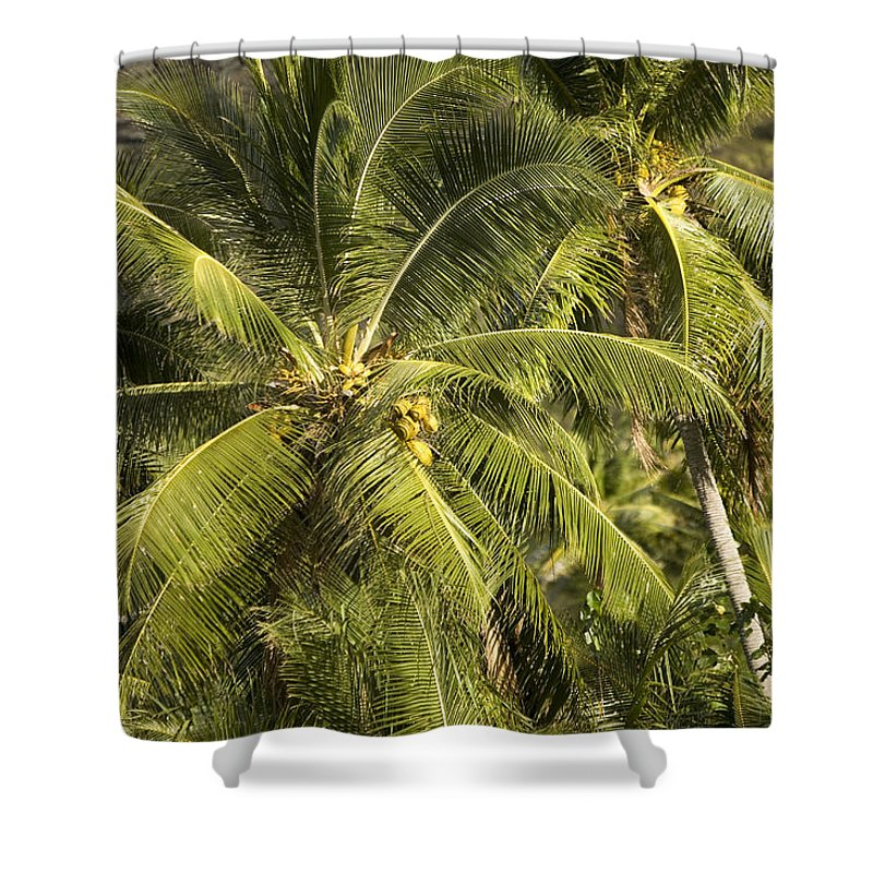 Palm Trees Shower Curtain featuring the photograph Closeup Of Coconut Palm Trees by Tim Laman