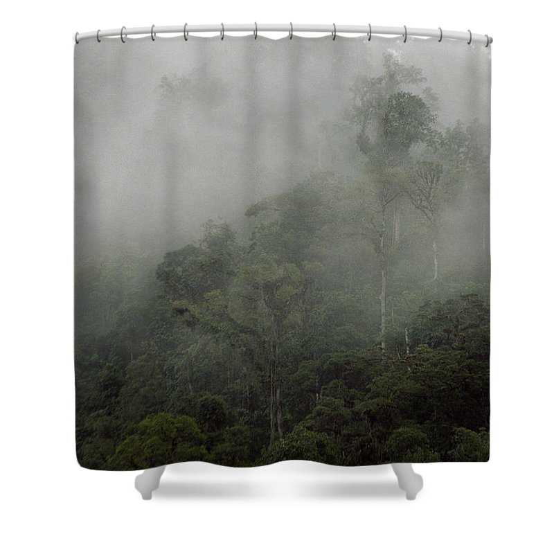 Rainforest Shower Curtain featuring the photograph Cloud Forest by Kathy McClure