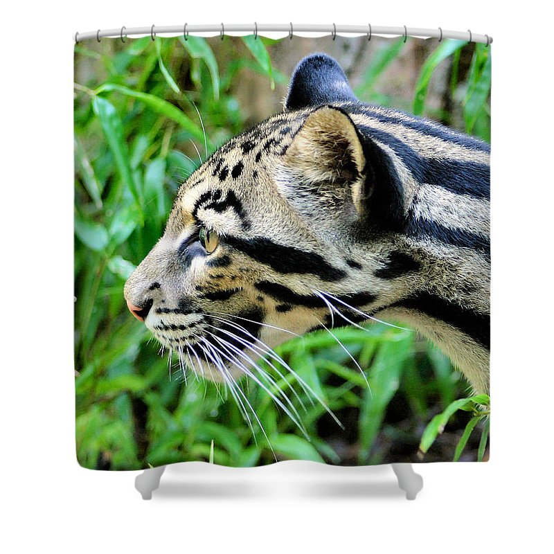 Clouded Leopard Shower Curtain featuring the photograph Clouded Leopard In The Grass by Kristin Elmquist