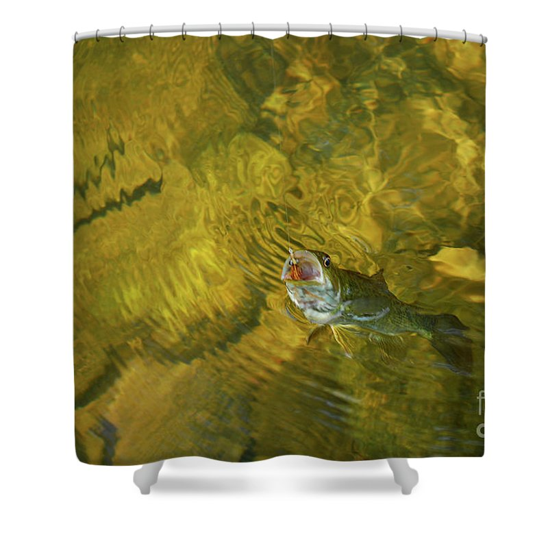 Fishing Shower Curtain featuring the photograph Clouser Smallmouth by Randy Bodkins
