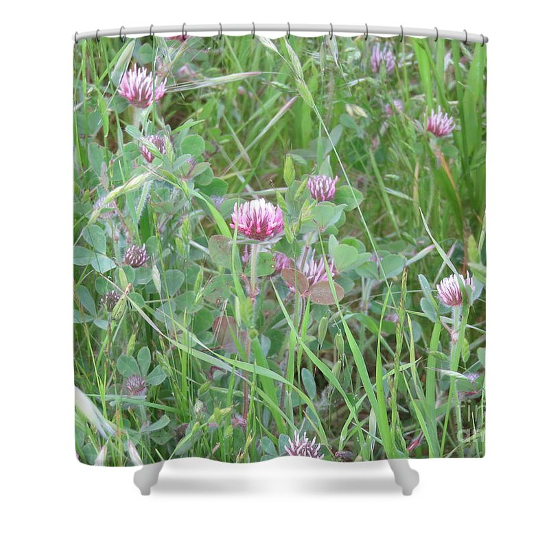 Landscape Shower Curtain featuring the photograph Clover In The Grass by Suzanne Leonard