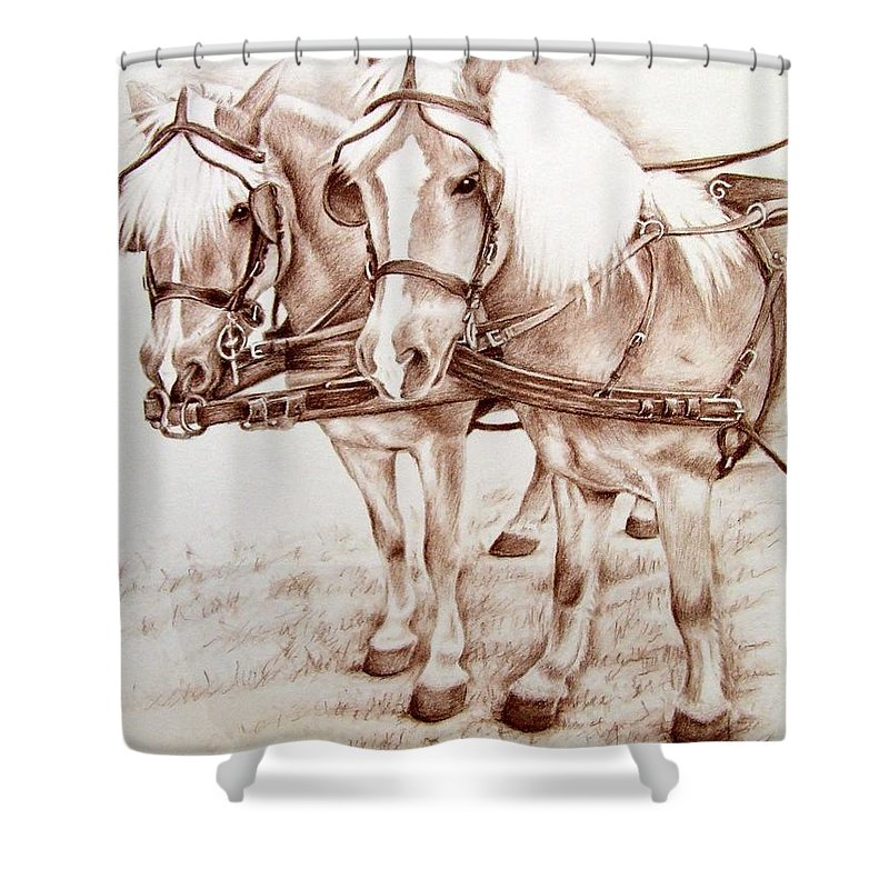 Horses Shower Curtain featuring the drawing Coach Horses by Nicole Zeug