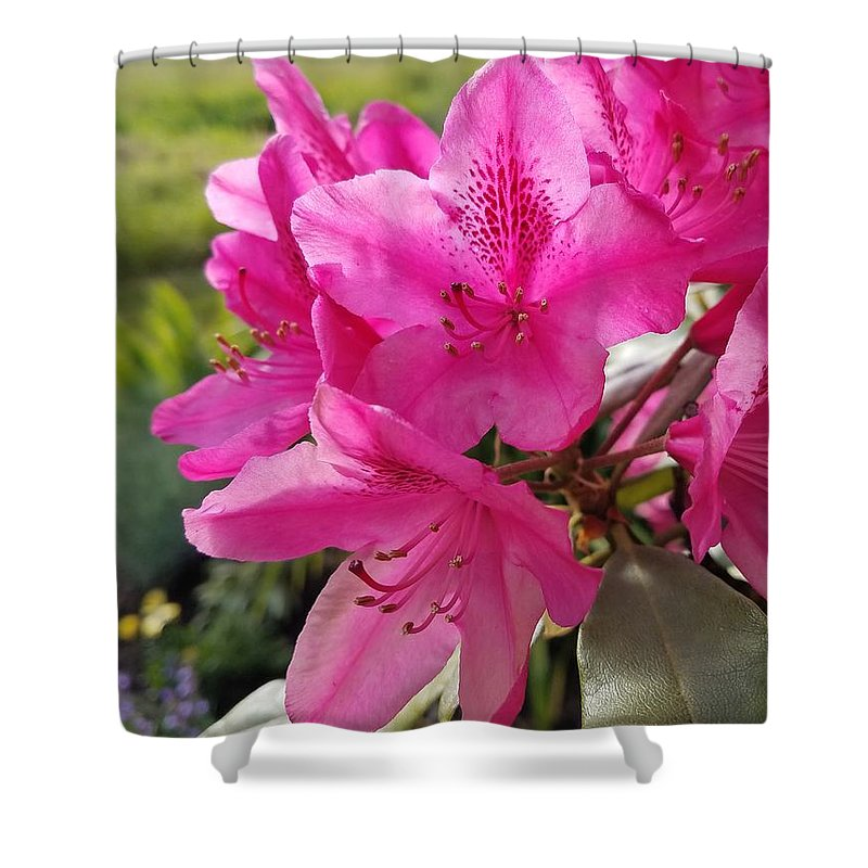 Flowers Shower Curtain featuring the photograph Coast Rhododendran- Washington State Flower by Jane Powell