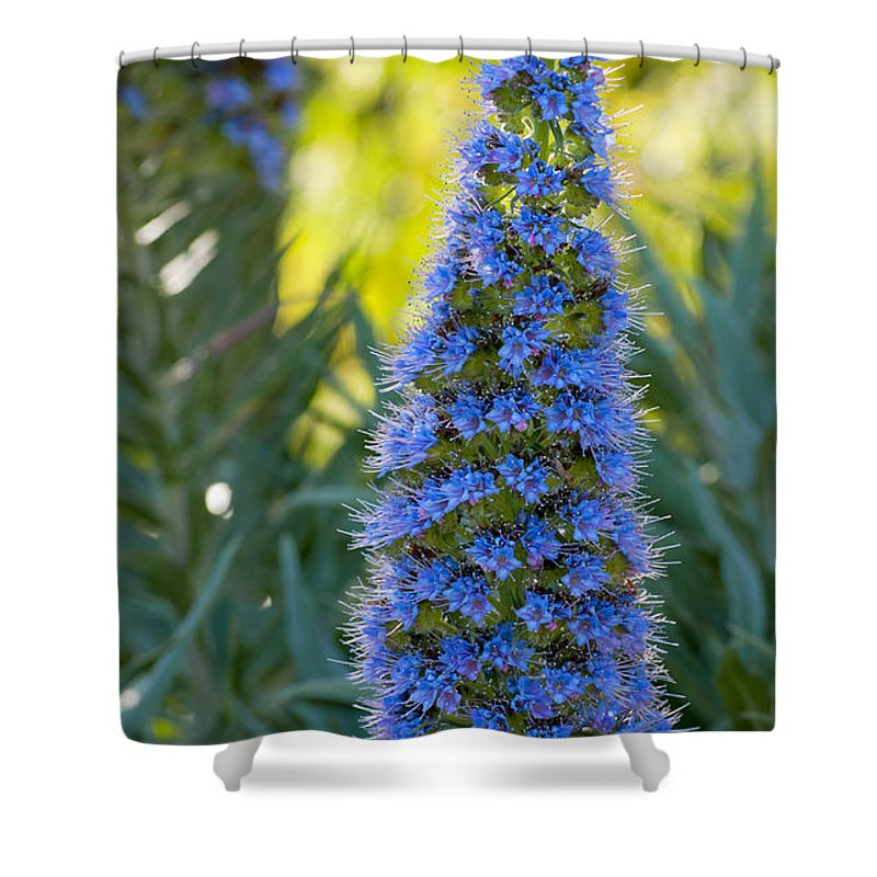 Flower Shower Curtain featuring the photograph Coastal Bloom by K D Graves