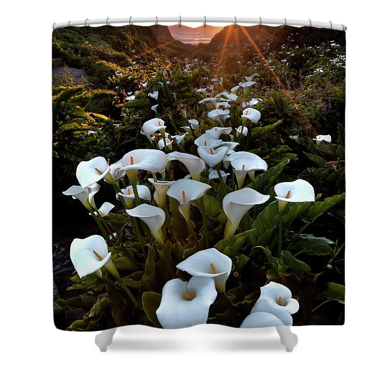 Big Sur Shower Curtain featuring the photograph Coastal Calla Lilies by Ryan Smith