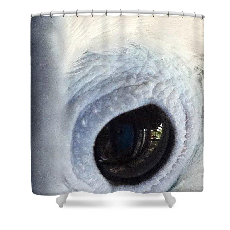 Shower Curtain featuring the photograph Cockatiel Eye by Teresa Doran