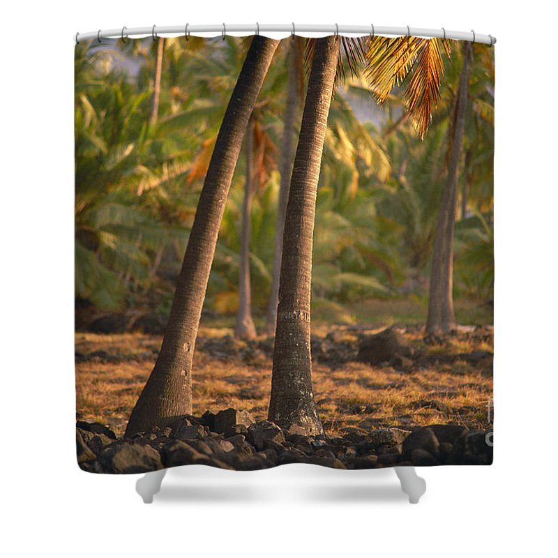 29-csm0203 Shower Curtain featuring the photograph Coconut Palm Grove by Greg Vaughn - Printscapes