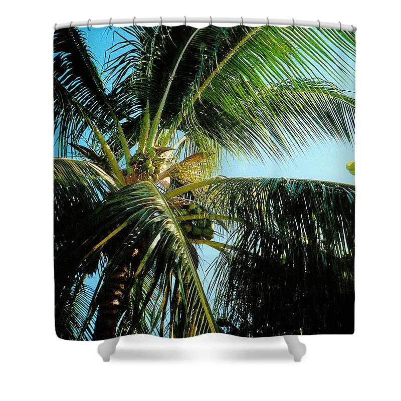 Jamaica Shower Curtain featuring the photograph Coconut Tree by Debbie Levene