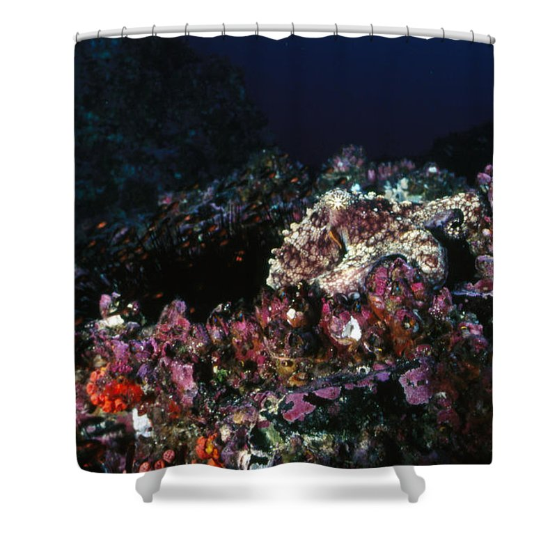Costa Rica Shower Curtain featuring the photograph Cocos Island Octopus Hiding On Reef by James Forte