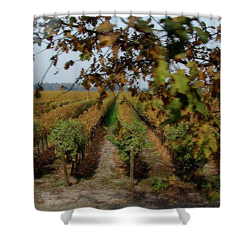 Colchagua Shower Curtain featuring the photograph Colchagua Valley Vineyard by Brett Winn