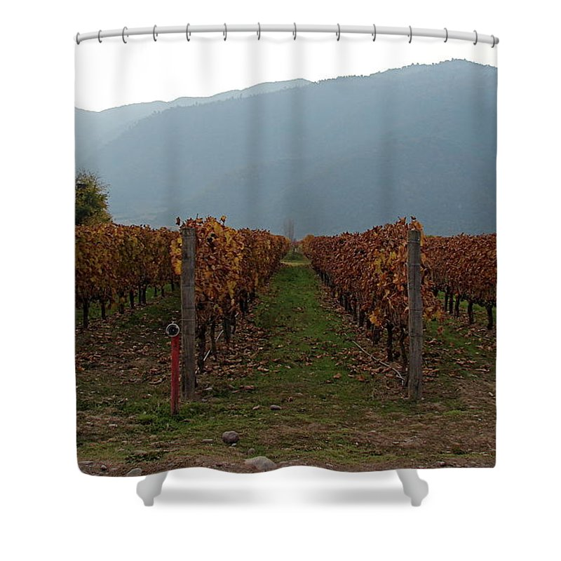 Colchagua Shower Curtain featuring the photograph Colchagua Valley Vinyard II by Brett Winn