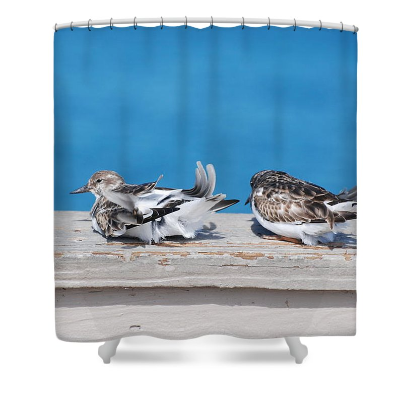 Bird Shower Curtain featuring the photograph Cold Birds by Rob Hans