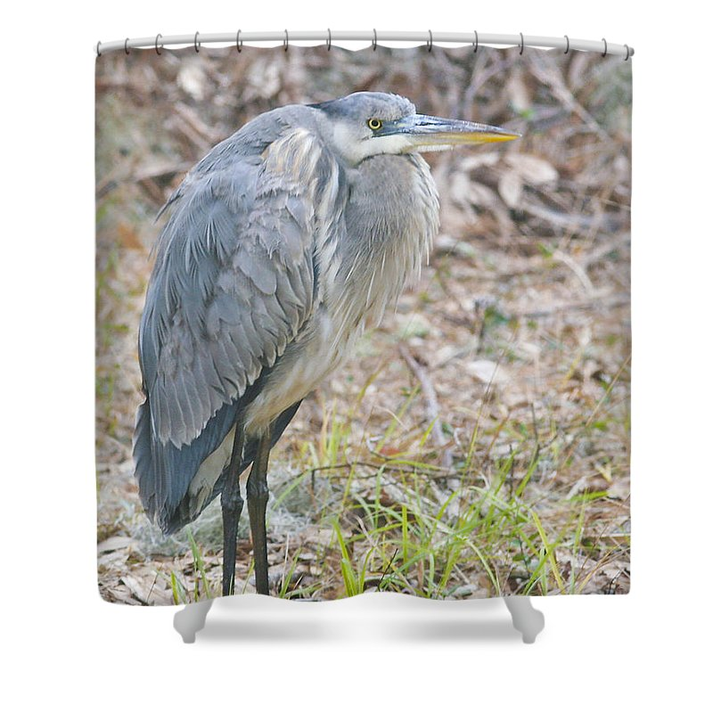 Bird Shower Curtain featuring the photograph Cold Blue Heron by Phill Doherty