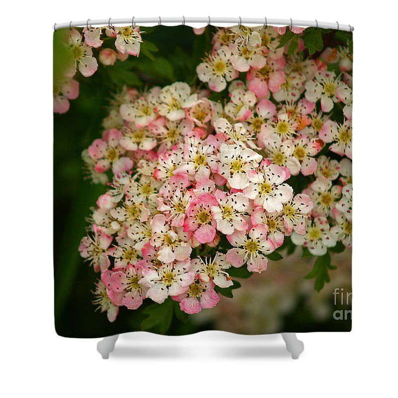 Fine Art Photography Shower Curtain featuring the photograph Colleen by Patricia Griffin Brett