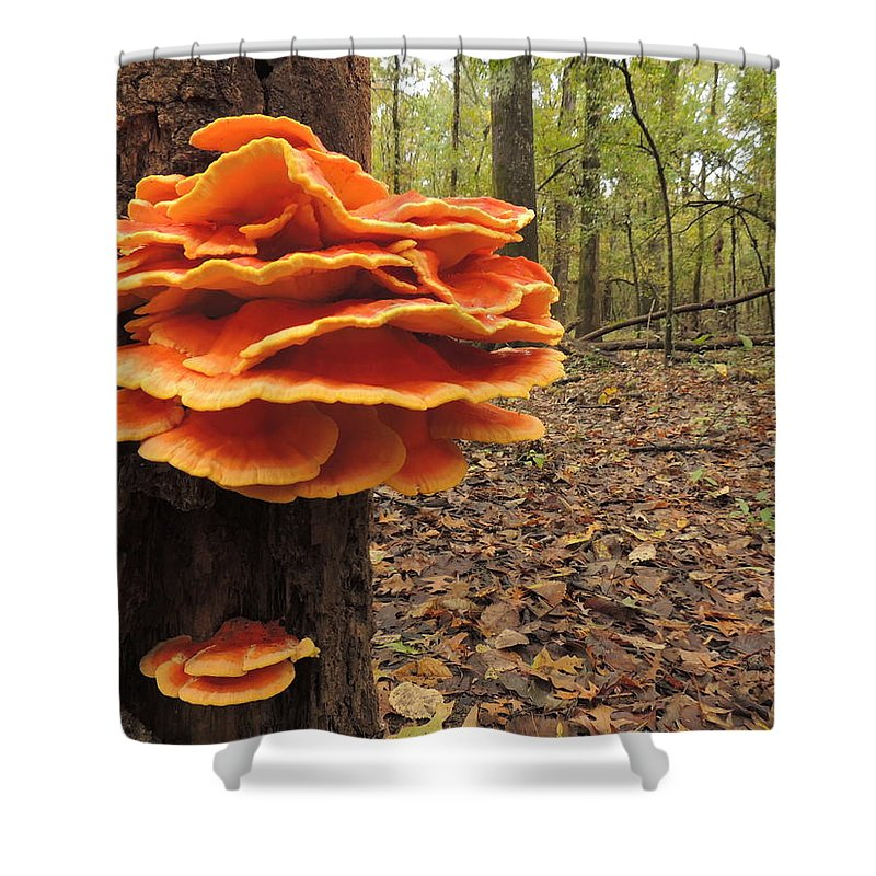 Mushroom Shower Curtain featuring the photograph Color In The Woods by Delana Epperson