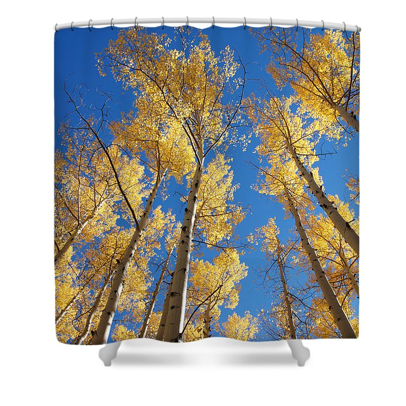Aspen Shower Curtain featuring the photograph Colorado Aspen by Jerry McElroy