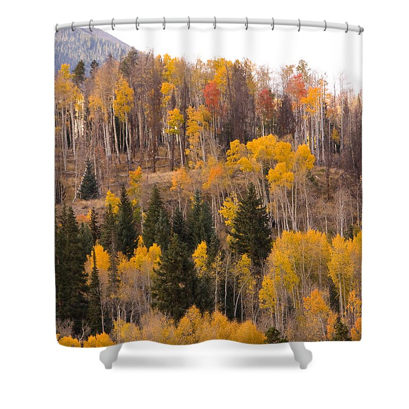 Trees Shower Curtain featuring the photograph Colorado Fall Foliage by James BO Insogna