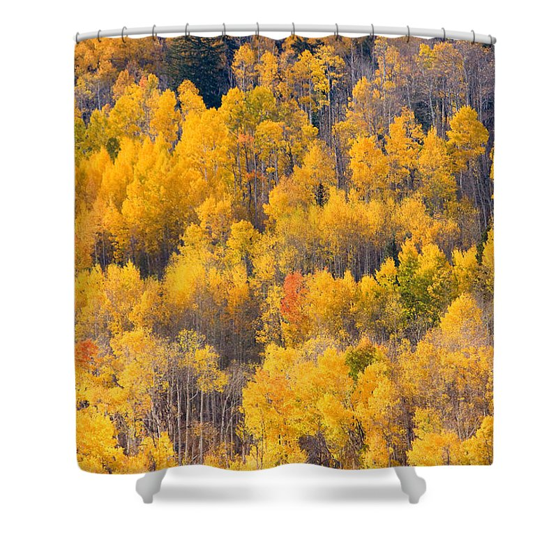 Trees Shower Curtain featuring the photograph Colorado High Country Autumn Colors by James BO Insogna