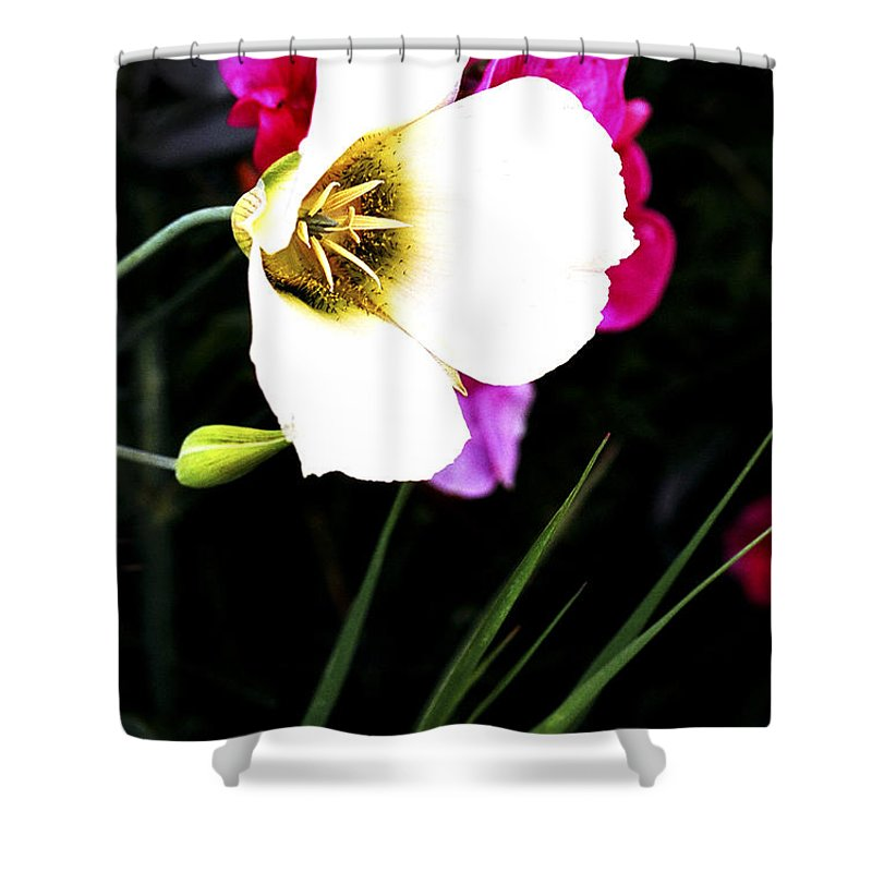 Wildflower Shower Curtain featuring the photograph Colorado Wildflower1 by Marilyn Hunt