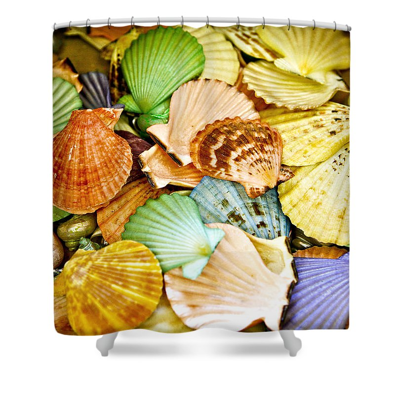 Shell Shower Curtain featuring the photograph Colored Shells by Marilyn Hunt