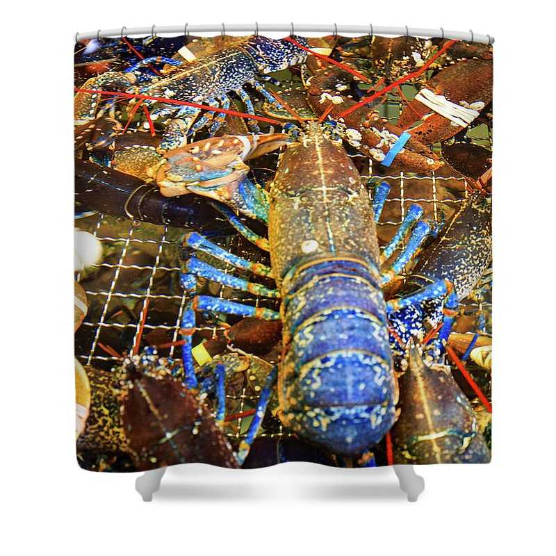 Lobster Shower Curtain featuring the photograph Colorful Blue Lobster by Allan Levin