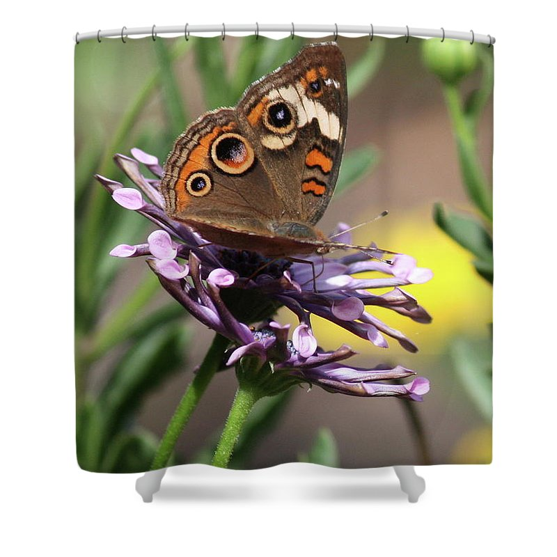 Nature Shower Curtain featuring the photograph Colorful Butterfly On Daisy by Carol Groenen