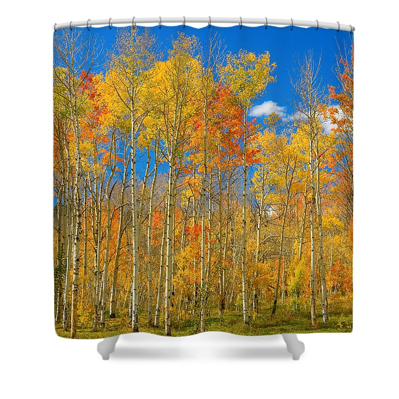 Autumn Shower Curtain featuring the photograph Colorful Colorado Autumn Landscape by James BO Insogna
