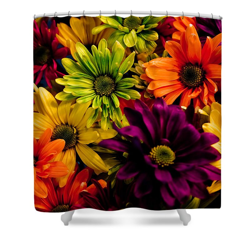 Daisies Shower Curtain featuring the photograph Colorful Daisies by Robin Lynne Schwind