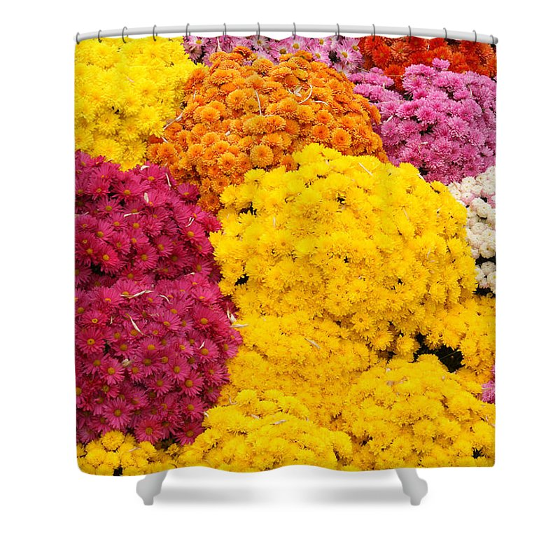Flowers Shower Curtain featuring the photograph Colorful Mum Flowers Fine Art Abstract Photo by James BO Insogna