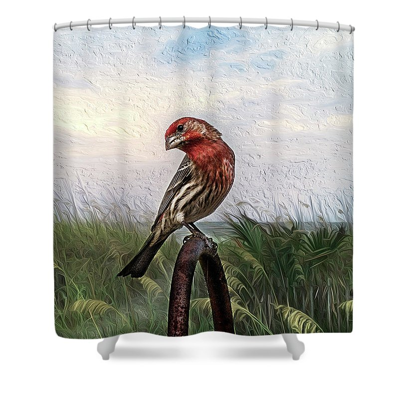 Purple Finch Shower Curtain featuring the photograph Colors Are Deceiving by Cynthia Wolfe
