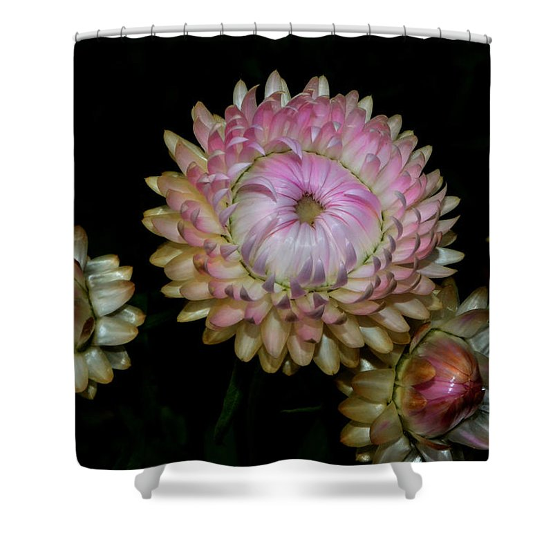 Floral Shower Curtain featuring the photograph Colors Of Nature - Grand Opening Stages 001 by George Bostian
