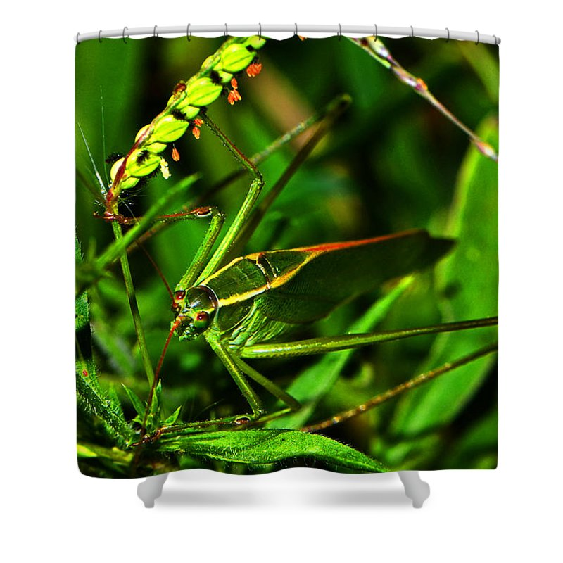 Green Shower Curtain featuring the photograph Colors Of Nature - Green Katydid 001 by George Bostian