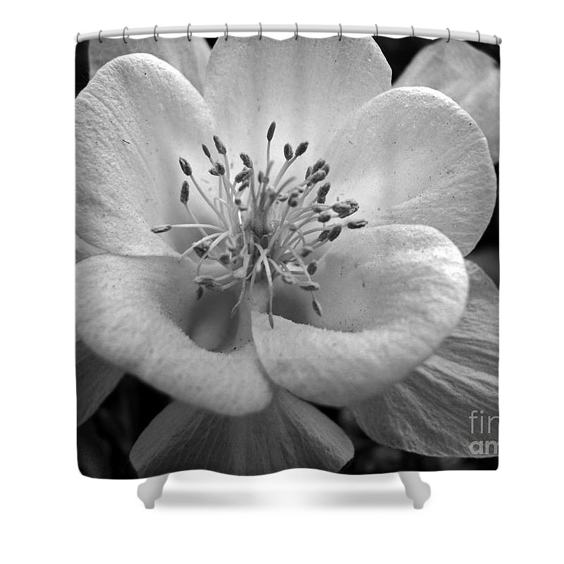 Flowers Shower Curtain featuring the photograph Columbine by Amanda Barcon