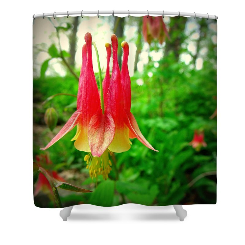 Columbine Shower Curtain featuring the photograph Columbine by Erin Rednour