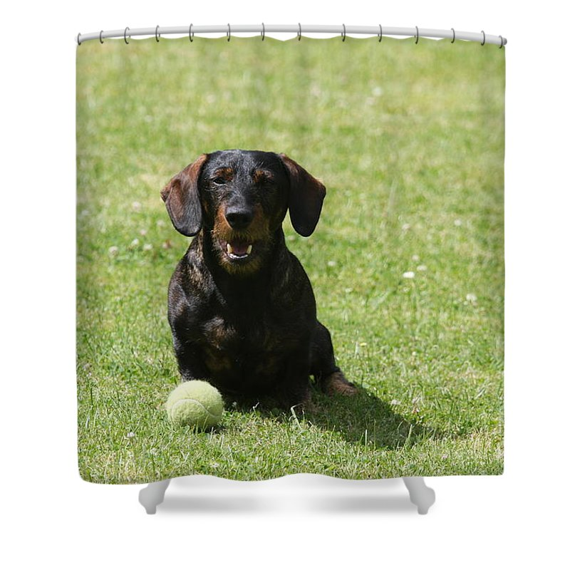 Dog Shower Curtain featuring the photograph Come on by Christiane Schulze Art And Photography