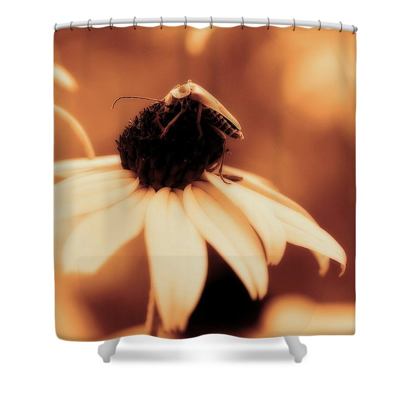 Black Eyed Susan Shower Curtain featuring the photograph Comfortably Perched - Gold Glow by Angela Rath